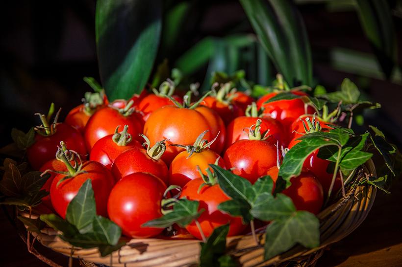 tomato Os 8 maiores alimentos antienvelhecimento