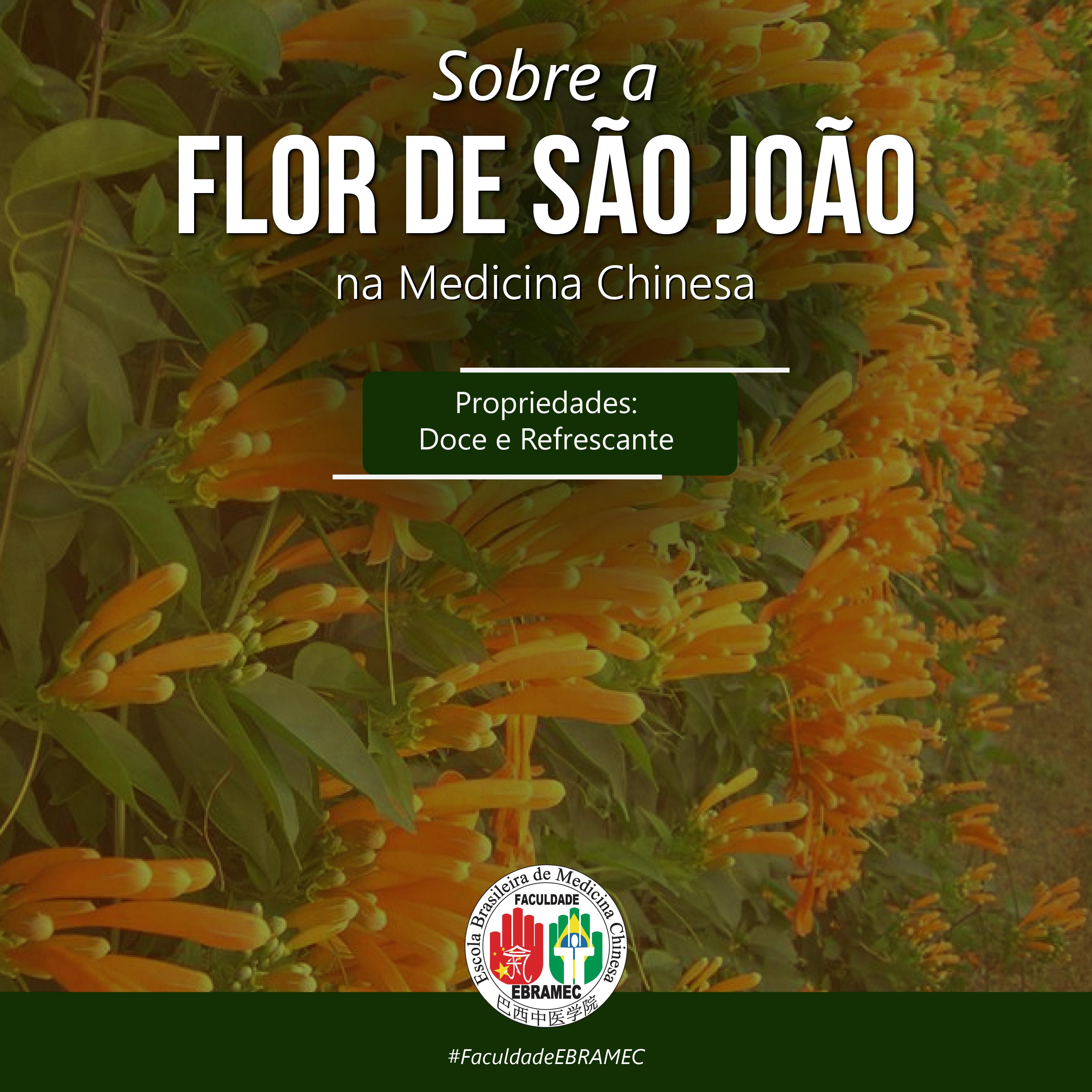 Flor-de-são-João-dicaPrancheta-1-cópia-19@3x-100 Dica de Erva Brasileira na Fitoterapia: A Flor de São João