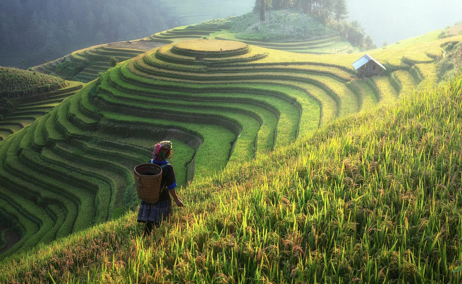 agriculture-1807576_1920 Curiosidades da China: Biologia e Agrícola